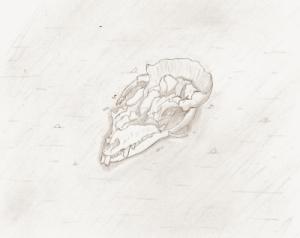 Skull-small