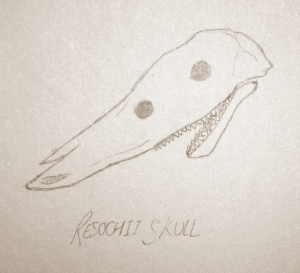 Resochi-skull
